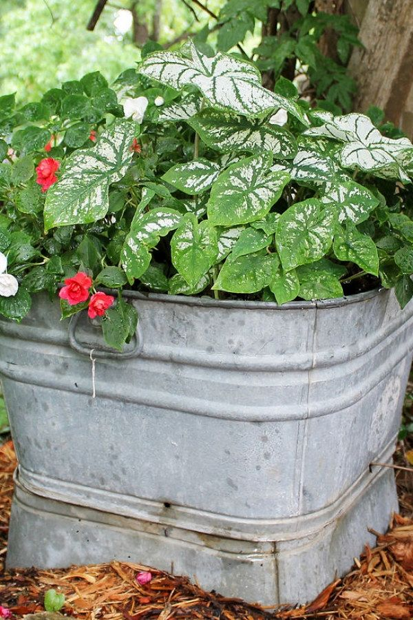 29 Beautiful DIY Container Garden Ideas you might consider for your on large flower pot design, hardy container garden design, container garden front yard, container pots flowers ideas, container flower garden south, container herb garden design, container pots with white flowers, container garden color ideas, plant pot flower design, hibiscus container garden design, container spring garden ideas, container flower gardens landscape design, backyard idea tropical garden design,