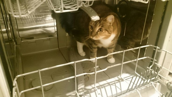 Da will wohl jemand gewaschen werden 😁 #Katze #cat #funny #catlove #amazing