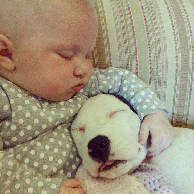 Eisleigh és Clyde együtt is aludtak  Pitbullok és gyerekek? - Hírek,   #eisleighandclyde #pitbull #kutya #dog #baby #cute #kutyabaráthelyek #kutyabarathelyek