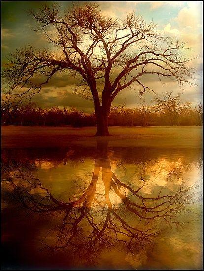 Looks very like the Celtic Tree of Life