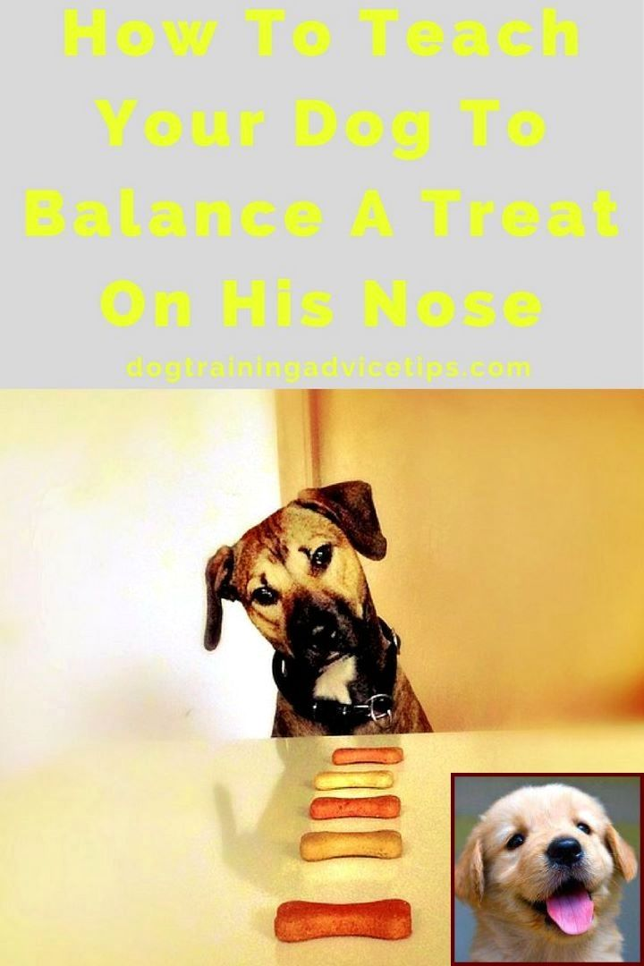 House Training A Puppy With Pee Pads And Dog Behavior Full Moon