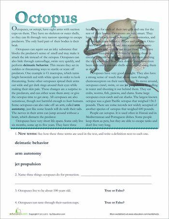 25+ parasta ideaa Turtle Facts For Kids Pinterestissä - fact sheet template word