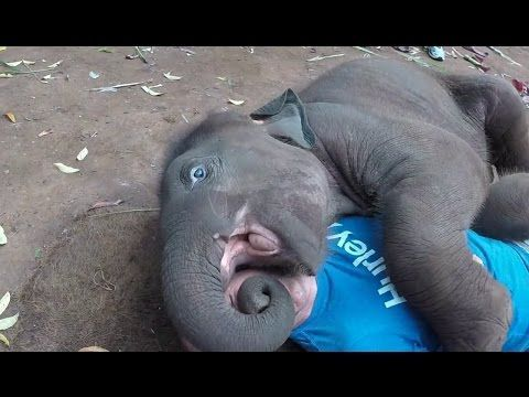 Baby Elephant Loves Cuddling with tourist || A Cute And Funny Baby Elephant Video 2017 - YouTube