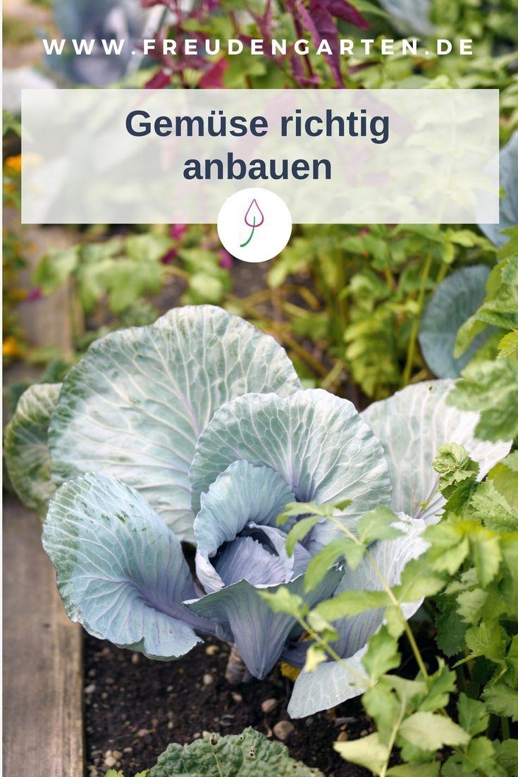 Gemüse im Garten richtig anbauen. #Garten #Gemüsegarten #garden #Gartenidee