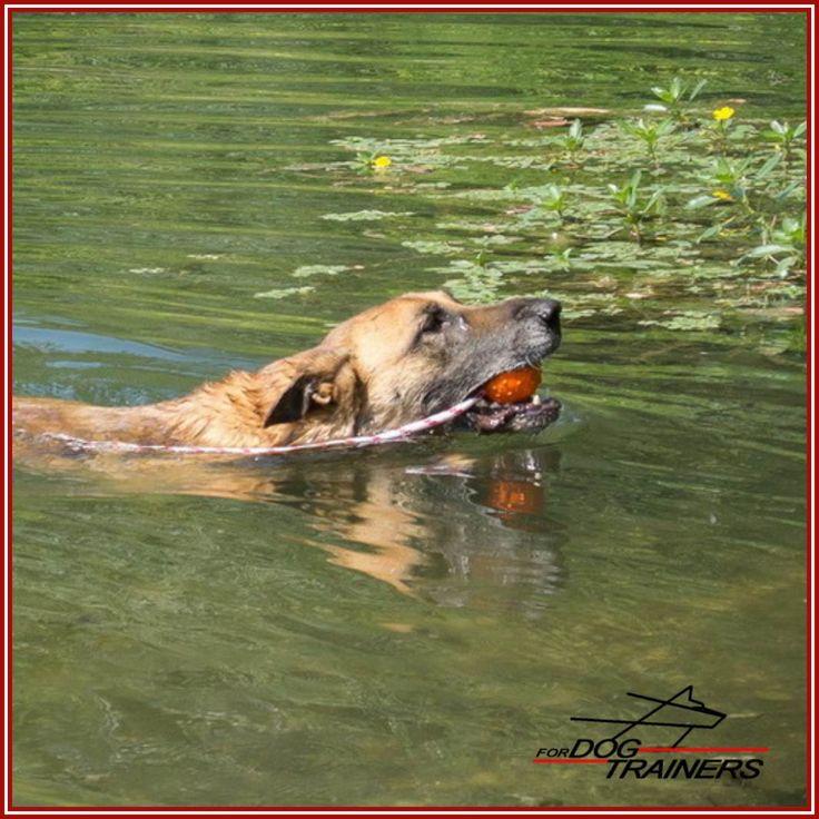 Pogoda dopisuje, warto aktywnie spędzić kilka chwil nad wodą ze swoim psem. Mamy do wyboru kolorowe piłki pływające: