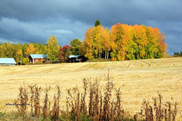 Syksy,autumn