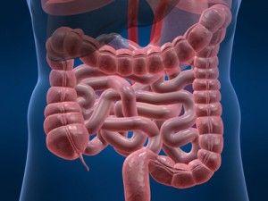 Prebiotics reduce colon cancer risk