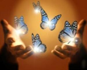 kék-fekete-fehér pillangók