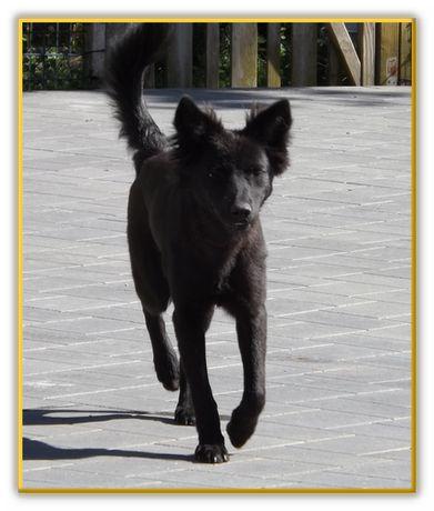 Hunde - Tierrettung - Grenzenlos