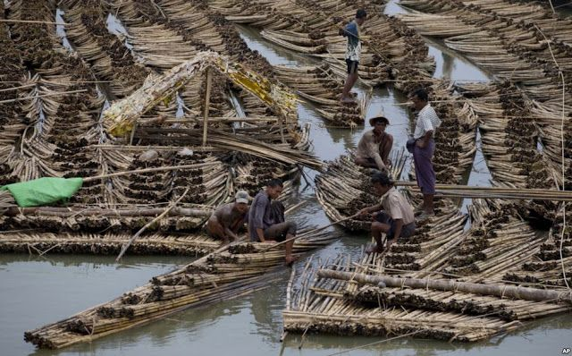 Workers push sections of a huge bamboo raft as others try to dismantle parts of it in Sittwe, northwestern Rakhine State,