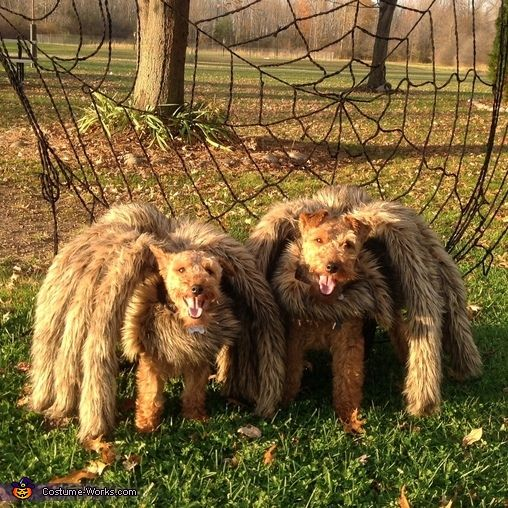 Sandra: Maize and Riley are Woof Spiders. I wanted my Welsh Terriers to be something different. I think I mastered it this year. I used a dogs life vest for the...