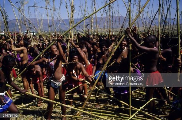 Maidens fight to find the best Reed for the annual Reed Dance on September 11 2004 in Nongoma in rural Natal South Africa About 20000 maidens from...