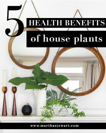 5 Health Benefits of House Plants | Martha Stewart Living - A potted plant is more than part of the decor. Scientific studies have proven that growing some live-in greenery will ease your stress, improve your state of mind, and purify the air in your home, among other health benefits.
