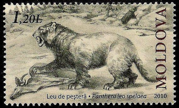 European cave lion Panthera leo spelaea Moldova -Handmade Framed Postage Stamp Art 19050