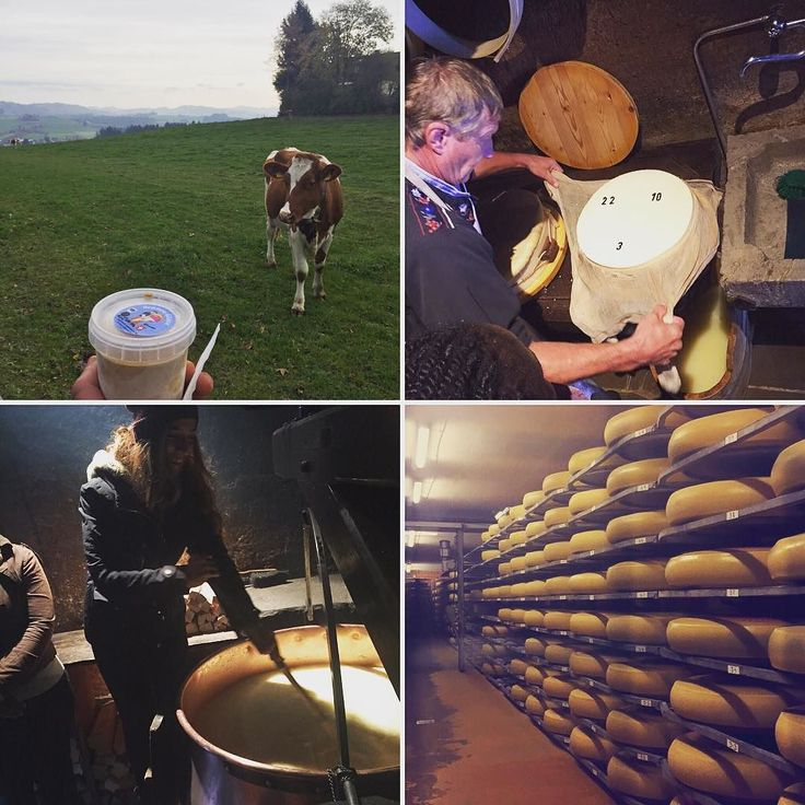 Here's to a wonderful day of making cheese frolicking with cows and just enjoying the great outdoors.  We got to see the process from start to finish and taste along the way! I also had to get a little taste of their fresh coffee ice cream. #emmenthal #say #mountain #farmlife #cheese #switzerland #swisscowsarehappycows #bakedbyt #bahrain by baked_by_t