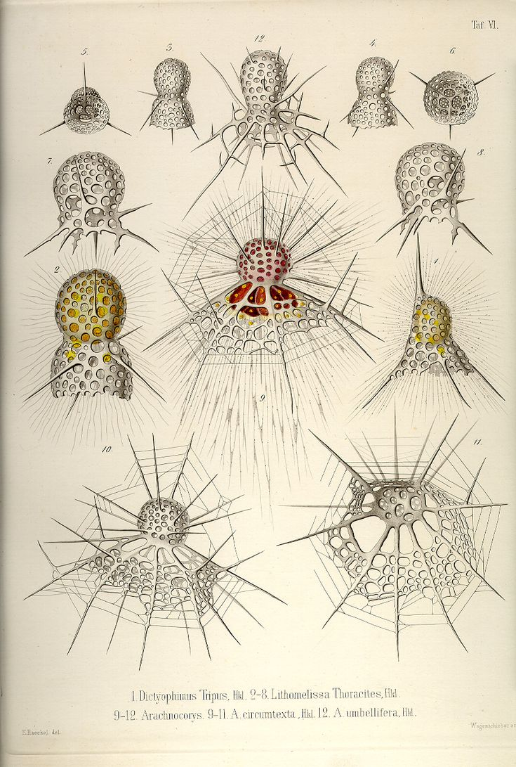 227 Best Images About Ernst Haeckel On Pinterest