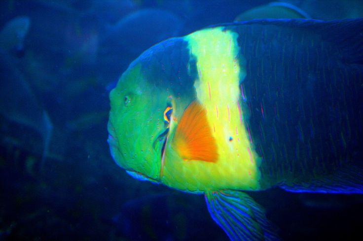 Dubai Aquarium , Underwater Photos - Fish Zoo