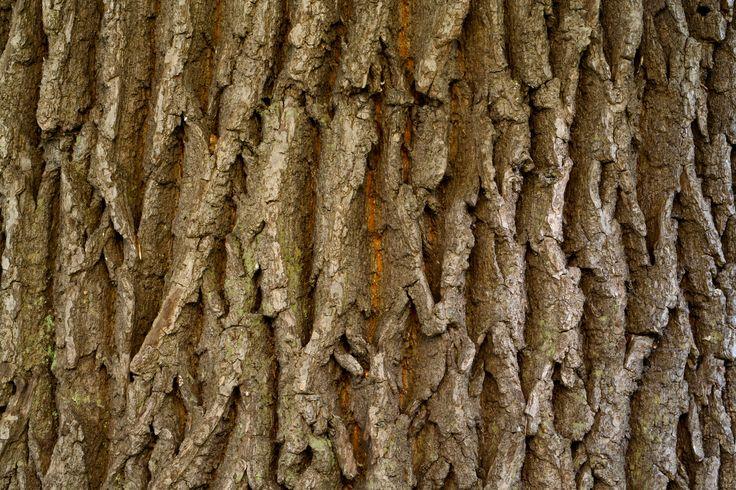 бесплатные обои узор текстура рельеф кожа дерева дерево для рабочего стола