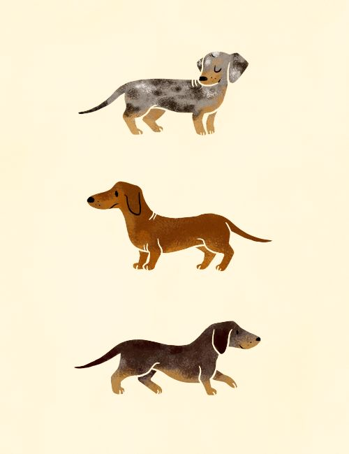 Doxies!