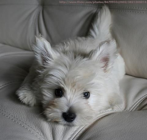 Visit critterzoneusa.com for lots of great info about taking care of your pets.
