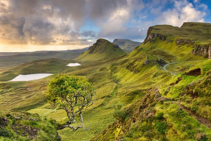 Tree at Quiraing by Michael Blanchette on 500px