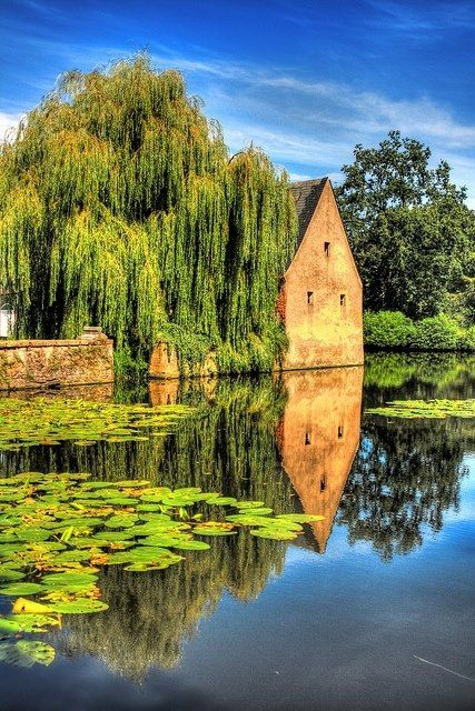 The Weeping Willow Pond in Bruges, Belgium.