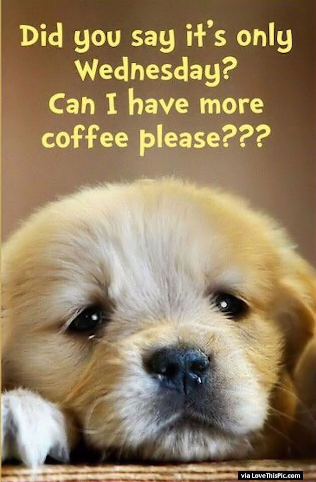 Did you Say Its Only Wednesday Can I Have More Coffee?