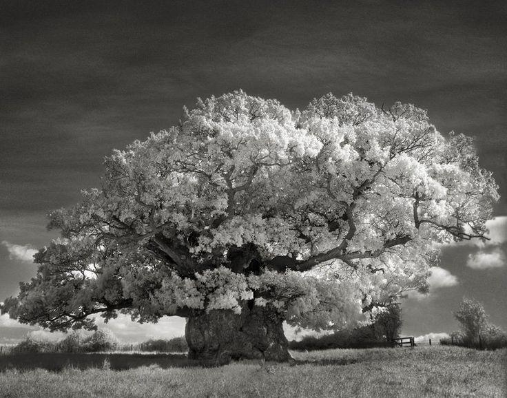 Elle a passé les 14 dernières années à photographier des arbres, et le résultat en vaut vraiment la peine !