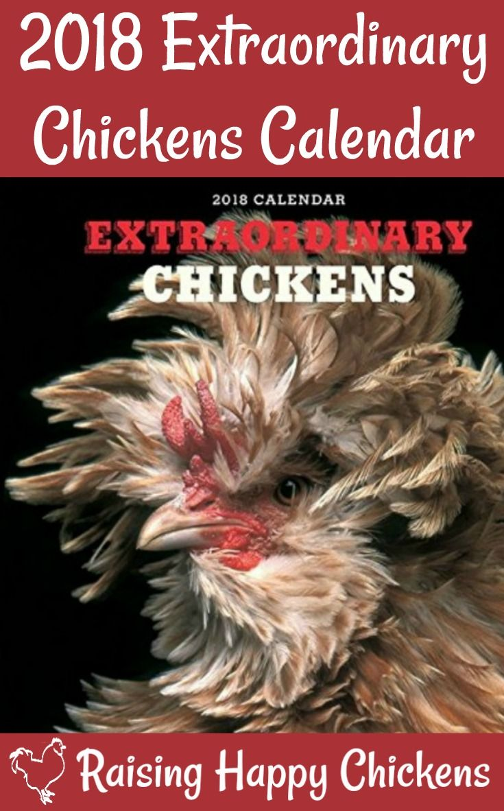 Don't miss out on this amazing, extraordinary chickens calendar! It always sells out well before Christmas. Ideal for the chicken-lover in your life!   On sale from 8 August 2017.