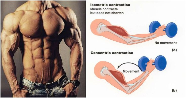 MASS GAINS: Isometric Contraction Training Method