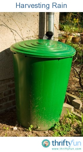 This is a guide about harvesting rain. Collecting and using rain water for your garden is good for the environment and can save you money.
