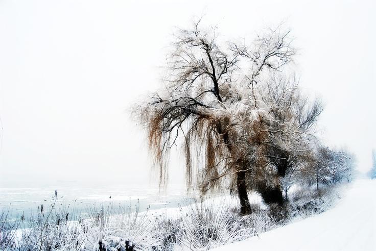 Lonely - ©AdiZAINESCU