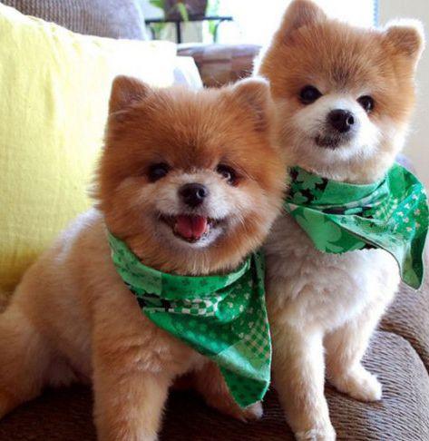 Poze amuzante cu animale - Bancuri-glume.org