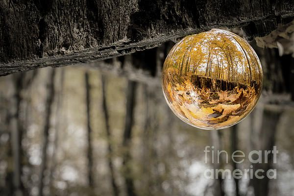 """This capture is a picturesque fisheye interpretation of the vibrant wooded forest surrounding Holy Hill Church through a composed 3"""" clear crystal ball dangling from an enormous tree stump.   Unauthorized use and/or duplication of this material without express and written permission from this author and/or owner is strictly prohibited. Wisconsin Photography"""