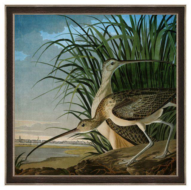 269 Best John James Audubon Images On Pinterest John