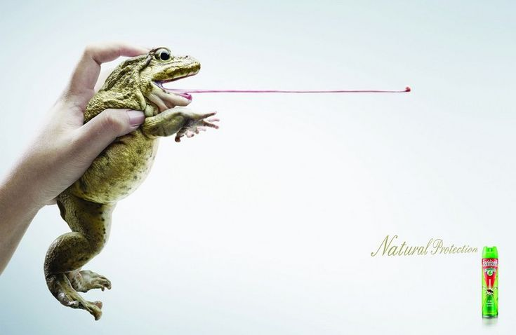 shieldtoxfrog.jpg (773×503)