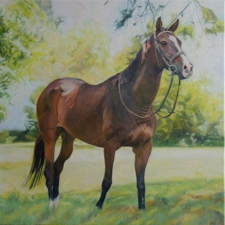 horse  oil on canvas size 50x50 ,2016   #horse #malarstwo #koń