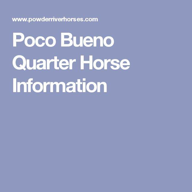 Poco Bueno  Quarter Horse Information