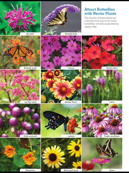 Attract butterflies to your garden #spring #lowes