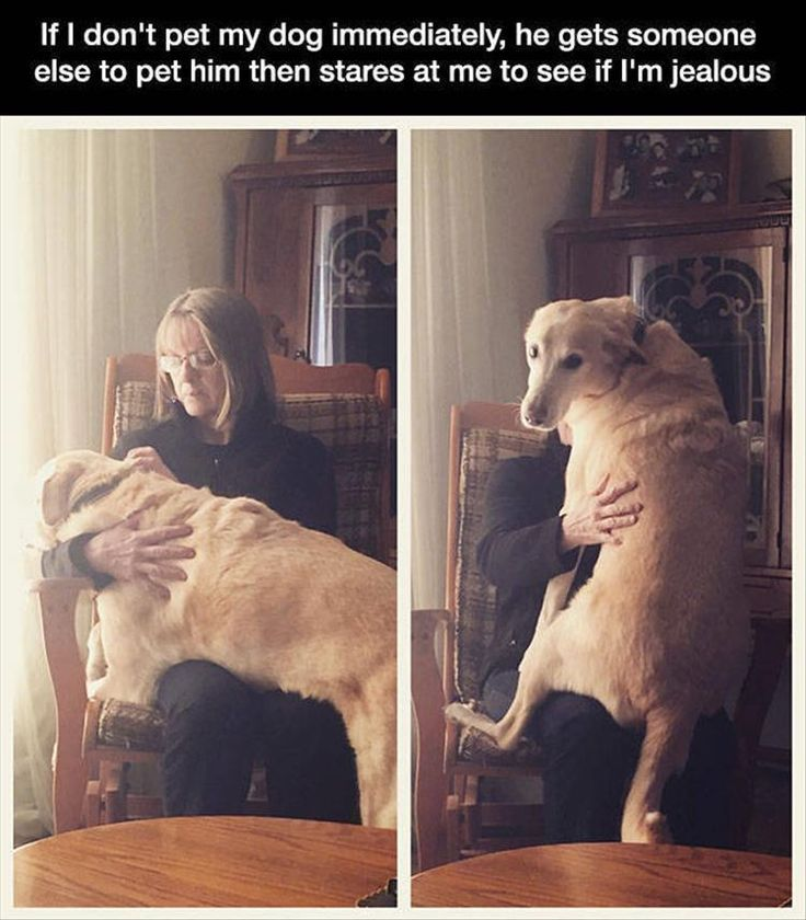 Funny Animals Of The Day – 24 Photos