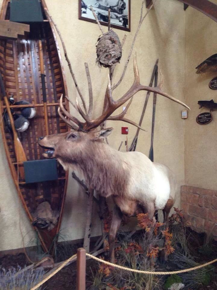 Elk mount fireplace - photo#45