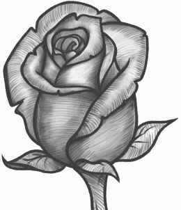 Best 25 rose drawings ideas on pinterest roses drawing tutorial how to draw a rose bud rose bud step by step flowers ccuart Image collections