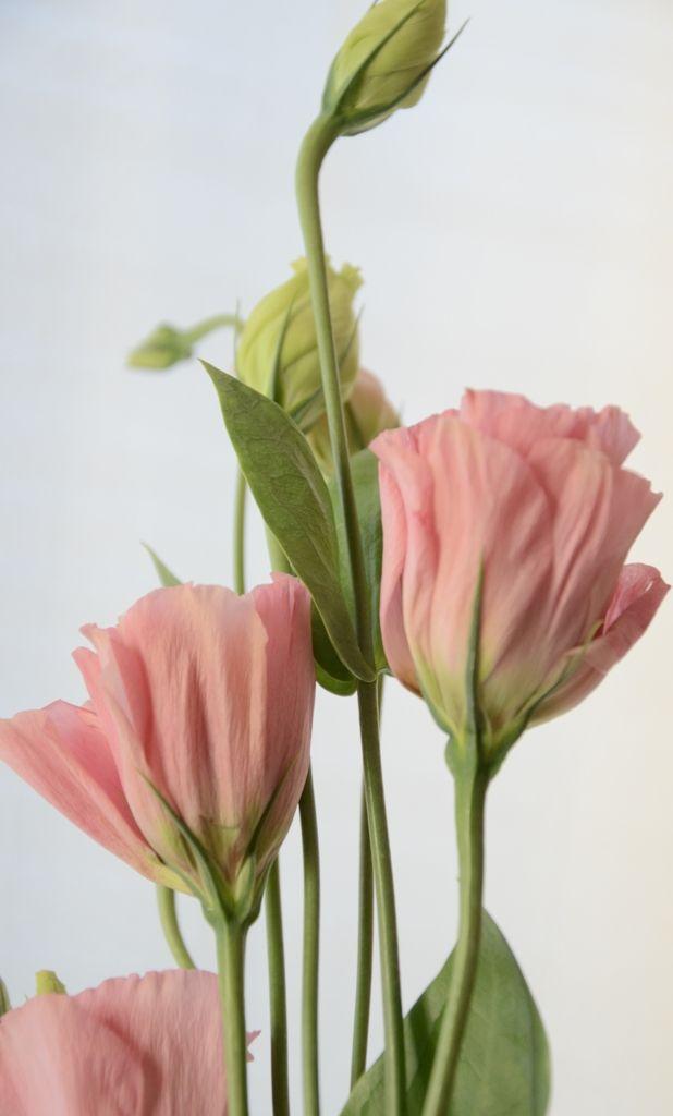 Unfurling by Catherine Andrako