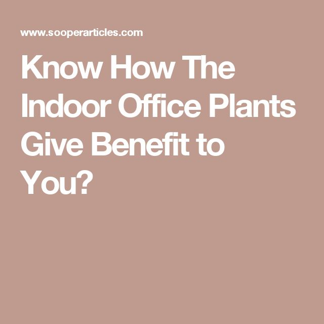 Know How The Indoor Office Plants Give Benefit to You?