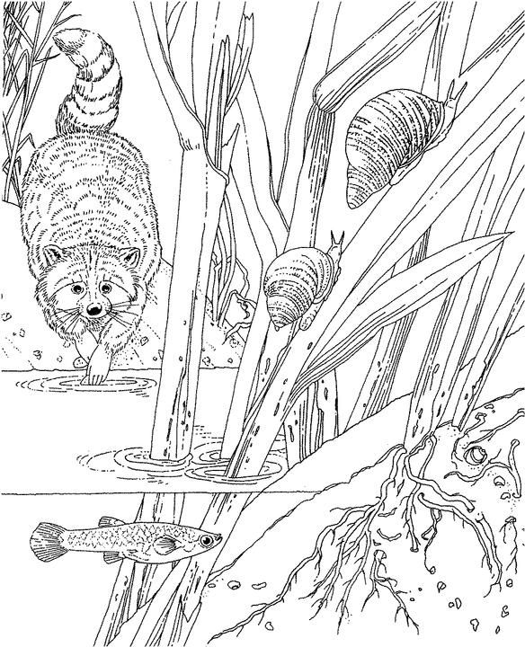 Ideal Ocean Plants Coloring Pages 76 Seascape Ocean Coloring Page
