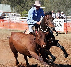 Terry Hall; Campdrafting