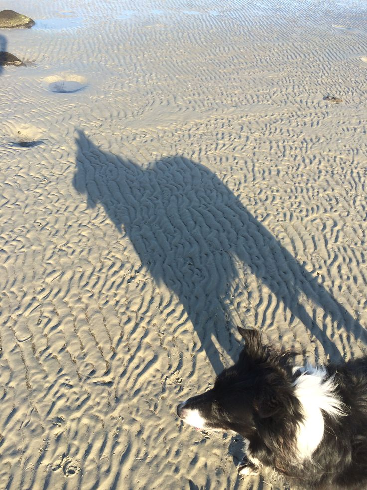 Dog and Dire Wolf!   Beach shadows, Williamstown