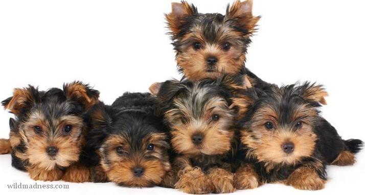 Most Lovable Cuddly Dog Breeds