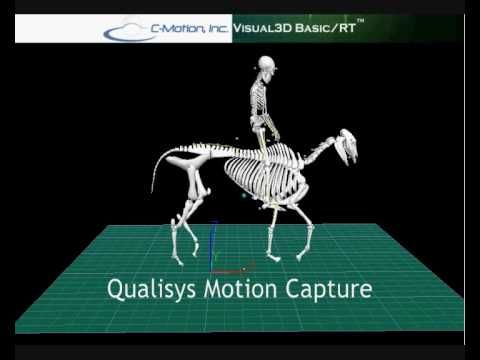 Qualisys Motion Capture of a Horse and rider - A Biomechanical Analysis of Relationship Between the Head and Neck Position, Vertebral Column and Limbs in the Horse at Walk and Trot.