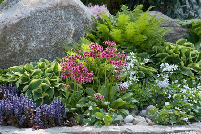 Garden ideas border ideas perennial planting perennial for Flowers for shade gardens